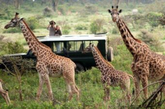 """Image result for kinds of safari animals"""""""