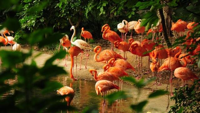 """Image result for water safari"""""""